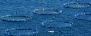 Менеджмент рыболовства