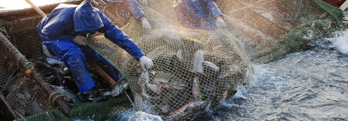 Промышленное рыболовство