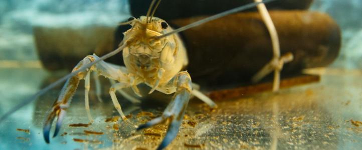 Водные биоресурсы и аквакультура
