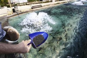 Техника и технология рыболовства