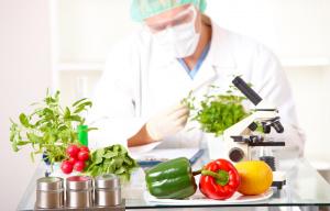 Пищевая инженерия малых предприятий